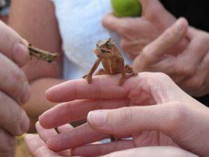 chameleon-home-boarding