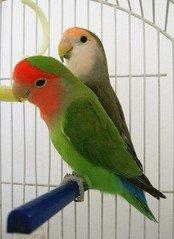 parrot-home-boarding-near-me